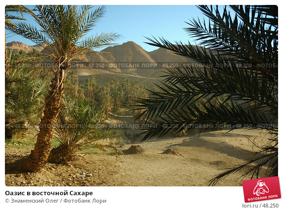 Купить «Оазис в восточной Сахаре», фото № 48250, снято 29 сентября 2004 г. (c) Знаменский Олег / Фотобанк Лори