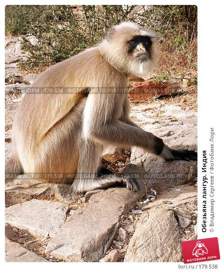 Обезьяна лангур. Индия, фото № 179538, снято 21 ноября 2004 г. (c) Владимир Сергеев / Фотобанк Лори