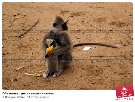 Обезьяна с детенышем и манго, фото № 79846, снято 16 июня 2007 г. (c) Валерий Шанин / Фотобанк Лори