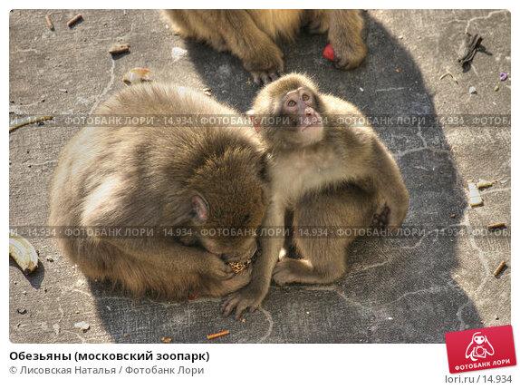 Обезьяны (московский зоопарк), фото № 14934, снято 2 октября 2005 г. (c) Лисовская Наталья / Фотобанк Лори