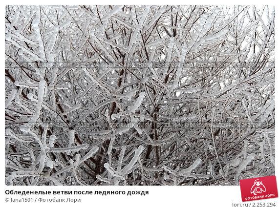 Купить «Обледенелые ветви после ледяного дождя», эксклюзивное фото № 2253294, снято 27 декабря 2010 г. (c) lana1501 / Фотобанк Лори