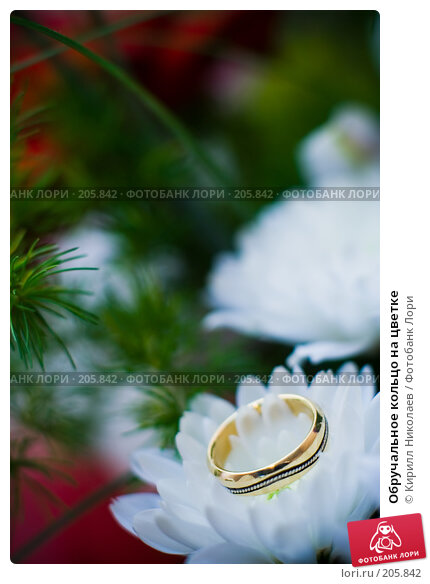 Обручальное кольцо на цветке, фото № 205842, снято 7 сентября 2007 г. (c) Кирилл Николаев / Фотобанк Лори
