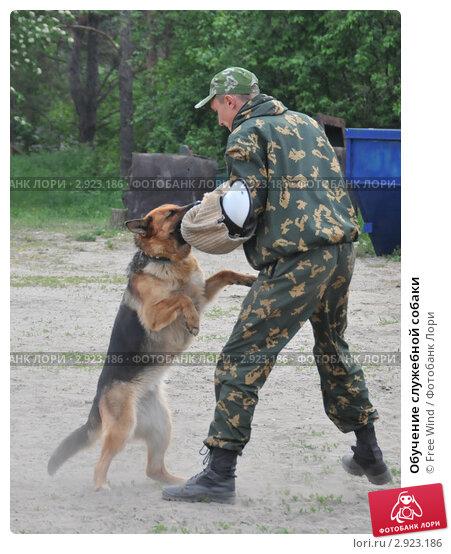 Купить «Обучение служебной собаки», эксклюзивное фото № 2923186, снято 27 мая 2011 г. (c) Free Wind / Фотобанк Лори