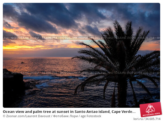 Ocean view and palm tree at sunset in Santo Antao island, Cape Verde... Стоковое фото, фотограф Zoonar.com/Laurent Davoust / age Fotostock / Фотобанк Лори