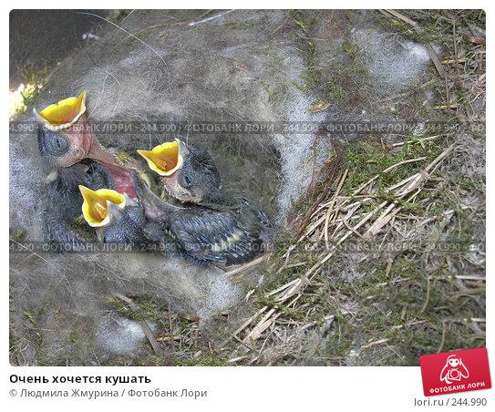 Очень хочется кушать, фото № 244990, снято 2 июня 2007 г. (c) Людмила Жмурина / Фотобанк Лори