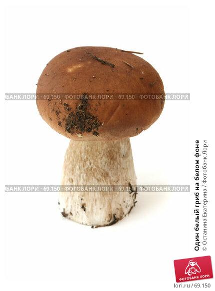 Один белый гриб на белом фоне, фото № 69150, снято 26 июля 2007 г. (c) Останина Екатерина / Фотобанк Лори
