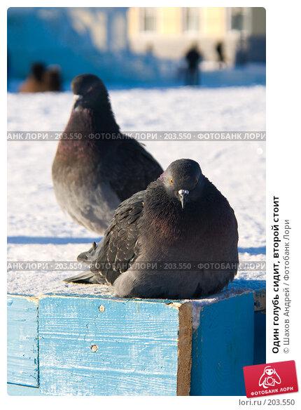 Купить «Один голубь сидит, второй стоит», фото № 203550, снято 7 февраля 2008 г. (c) Шахов Андрей / Фотобанк Лори