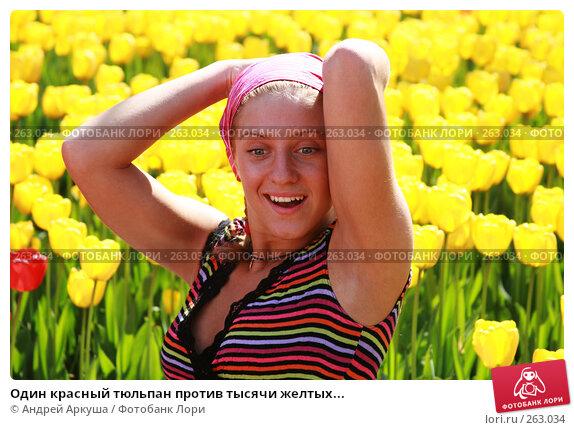Один красный тюльпан против тысячи желтых..., фото № 263034, снято 25 апреля 2008 г. (c) Андрей Аркуша / Фотобанк Лори