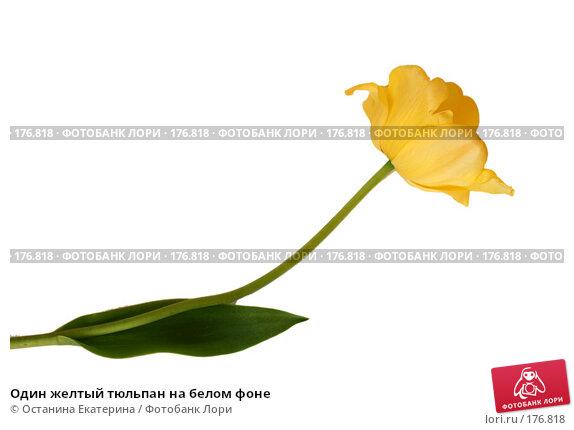 Один желтый тюльпан на белом фоне, фото № 176818, снято 23 мая 2007 г. (c) Останина Екатерина / Фотобанк Лори
