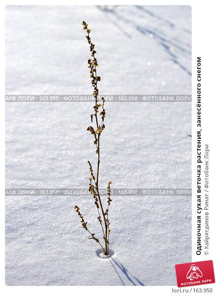 Купить «Одиночная сухая веточка растения, занесённого снегом», фото № 163950, снято 28 декабря 2007 г. (c) Хайрятдинов Ринат / Фотобанк Лори