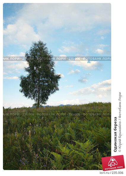 Одинокая береза, фото № 235006, снято 2 сентября 2007 г. (c) Юрий Брыкайло / Фотобанк Лори