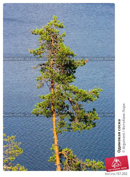 Купить «Одинокая сосна», фото № 57202, снято 27 июля 2005 г. (c) Argument / Фотобанк Лори