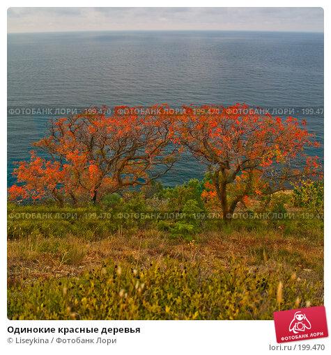 Одинокие красные деревья, фото № 199470, снято 25 сентября 2007 г. (c) Liseykina / Фотобанк Лори