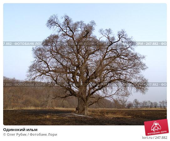Одинокий ильм, фото № 247882, снято 10 апреля 2008 г. (c) Олег Рубик / Фотобанк Лори