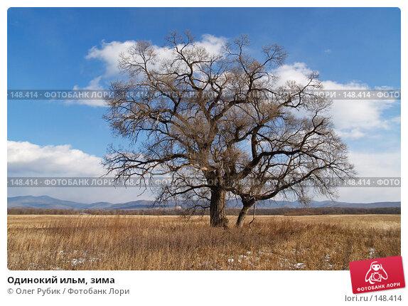 Одинокий ильм, зима, фото № 148414, снято 2 декабря 2007 г. (c) Олег Рубик / Фотобанк Лори