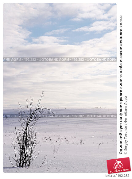 Одинокий куст на фоне яркого синего неба и заснеженного холма, фото № 192282, снято 27 января 2008 г. (c) Sergey Toronto / Фотобанк Лори