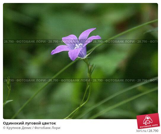 Одинокий луговой цветок, фото № 28790, снято 16 июля 2005 г. (c) Крупнов Денис / Фотобанк Лори