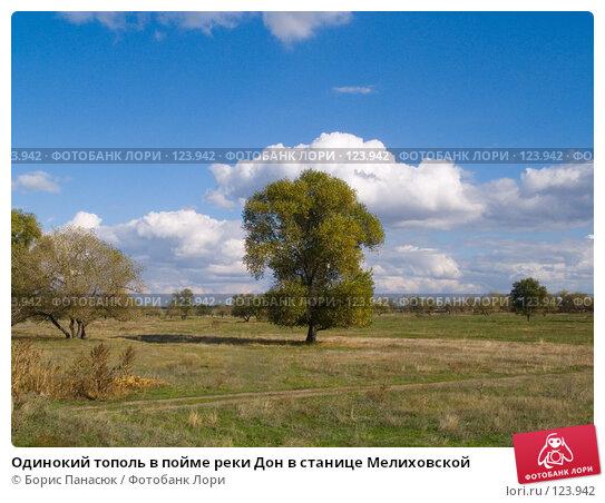 Одинокий тополь в пойме реки Дон в станице Мелиховской, фото № 123942, снято 11 сентября 2006 г. (c) Борис Панасюк / Фотобанк Лори