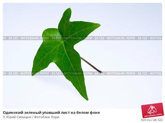 Купить «Одинокий зеленый упавший лист на белом фоне», фото № 24122, снято 6 марта 2007 г. (c) Юрий Синицын / Фотобанк Лори