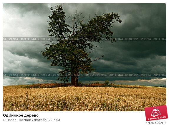 Одинокое дерево, фото № 29914, снято 30 июля 2006 г. (c) Павел Преснов / Фотобанк Лори