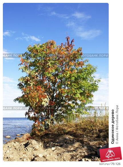 Одинокое дерево, фото № 79126, снято 3 августа 2007 г. (c) Анна / Фотобанк Лори