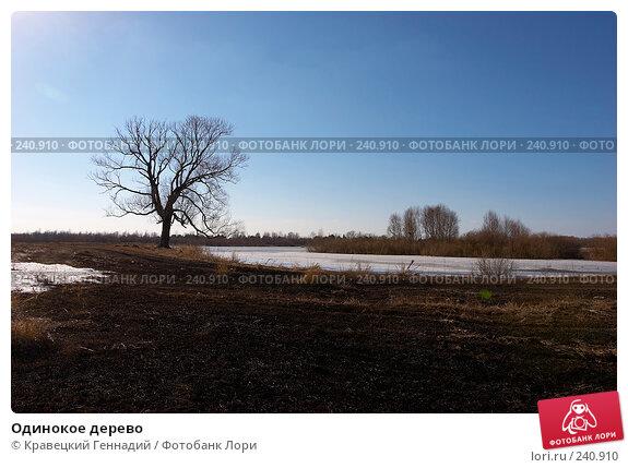 Одинокое дерево, фото № 240910, снято 25 марта 2017 г. (c) Кравецкий Геннадий / Фотобанк Лори