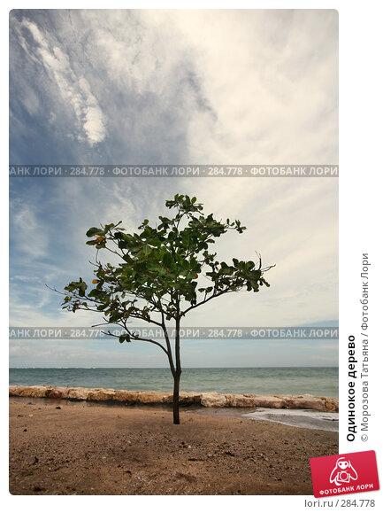 Одинокое дерево, фото № 284778, снято 23 февраля 2008 г. (c) Морозова Татьяна / Фотобанк Лори