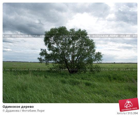 Одинокое дерево, фото № 313394, снято 6 июня 2008 г. (c) Дудакова / Фотобанк Лори