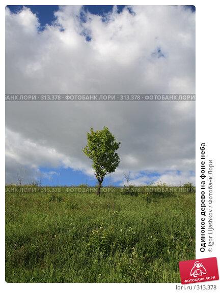 Купить «Одинокое дерево на фоне неба», фото № 313378, снято 5 июня 2008 г. (c) Igor Lijashkov / Фотобанк Лори