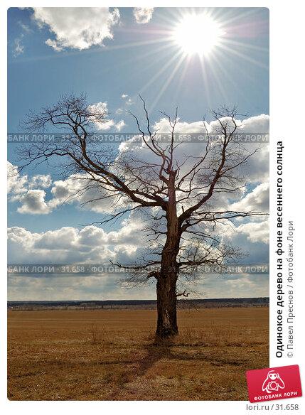 Одинокое дерево на фоне весеннего солнца, фото № 31658, снято 10 апреля 2007 г. (c) Павел Преснов / Фотобанк Лори