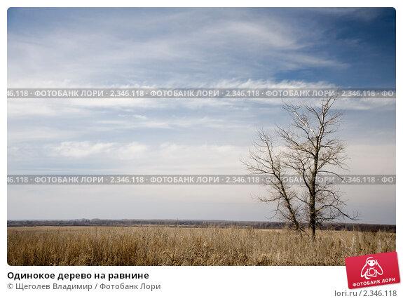 Одинокое дерево на равнине. Стоковое фото, фотограф Щеголев Владимир / Фотобанк Лори