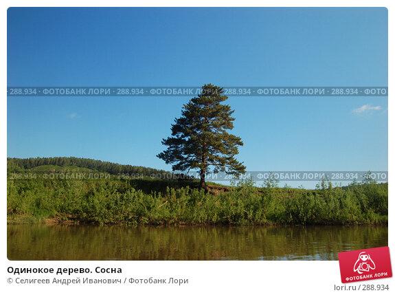 Одинокое дерево. Сосна, фото № 288934, снято 12 июня 2007 г. (c) Селигеев Андрей Иванович / Фотобанк Лори