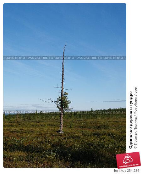 Одинокое дерево в тундре, фото № 254234, снято 17 августа 2006 г. (c) Примак Полина / Фотобанк Лори