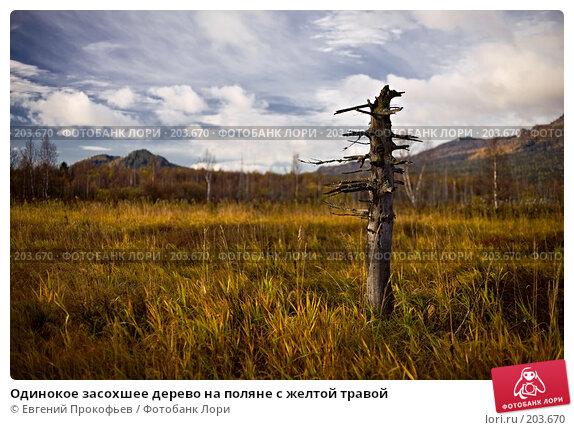 Одинокое засохшее дерево на поляне с желтой травой, фото № 203670, снято 30 сентября 2007 г. (c) Евгений Прокофьев / Фотобанк Лори