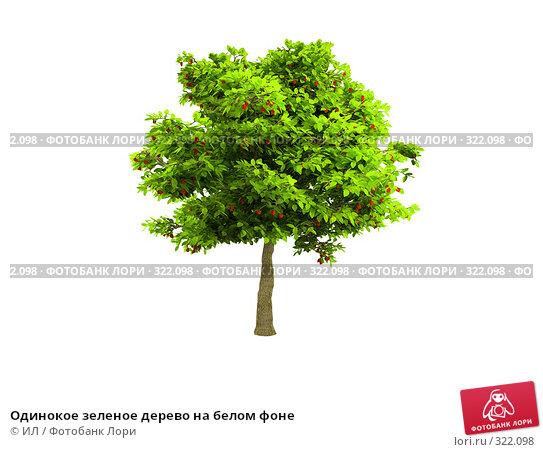 Одинокое зеленое дерево на белом фоне, иллюстрация № 322098 (c) ИЛ / Фотобанк Лори