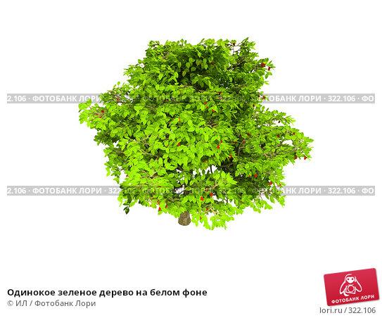 Одинокое зеленое дерево на белом фоне, иллюстрация № 322106 (c) ИЛ / Фотобанк Лори