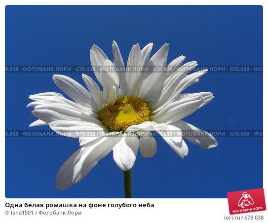 Одна белая ромашка на фоне голубого неба, эксклюзивное фото № 678038, снято 12 июля 2008 г. (c) lana1501 / Фотобанк Лори