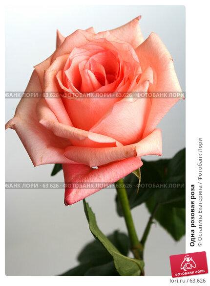 Одна розовая роза, фото № 63626, снято 13 июля 2007 г. (c) Останина Екатерина / Фотобанк Лори