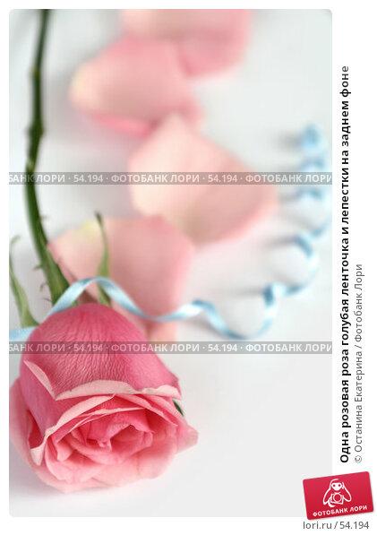 Одна розовая роза голубая ленточка и лепестки на заднем фоне, фото № 54194, снято 22 февраля 2007 г. (c) Останина Екатерина / Фотобанк Лори