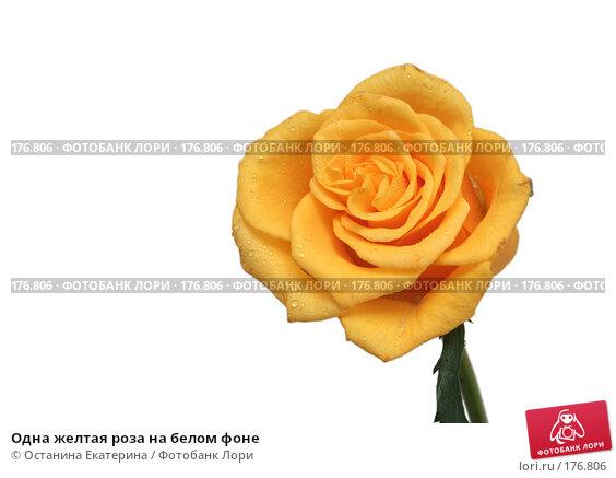 Одна желтая роза на белом фоне, фото № 176806, снято 15 января 2008 г. (c) Останина Екатерина / Фотобанк Лори