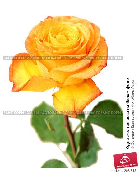 Купить «Одна желтая роза на белом фоне», фото № 208818, снято 4 августа 2007 г. (c) Останина Екатерина / Фотобанк Лори