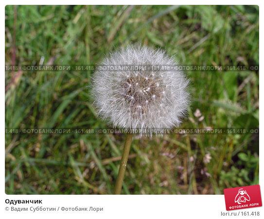Одуванчик, фото № 161418, снято 23 октября 2016 г. (c) Вадим Субботин / Фотобанк Лори