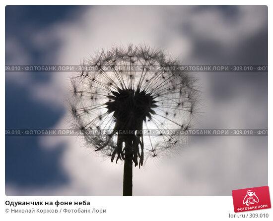 Одуванчик на фоне неба, фото № 309010, снято 31 мая 2008 г. (c) Николай Коржов / Фотобанк Лори