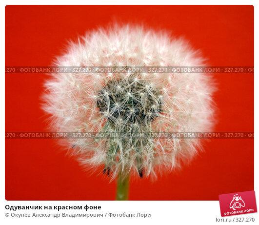 Одуванчик на красном фоне, фото № 327270, снято 14 июня 2008 г. (c) Окунев Александр Владимирович / Фотобанк Лори