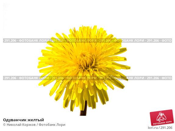 Одуванчик желтый, фото № 291206, снято 17 мая 2008 г. (c) Николай Коржов / Фотобанк Лори