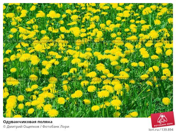 Одуванчиковая поляна, фото № 139894, снято 18 мая 2007 г. (c) Дмитрий Ощепков / Фотобанк Лори