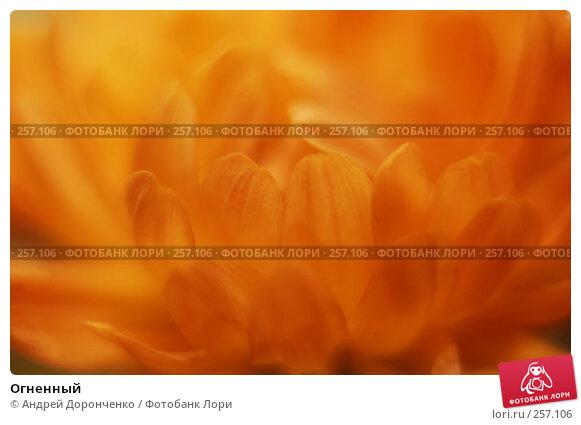 Купить «Огненный», фото № 257106, снято 26 апреля 2018 г. (c) Андрей Доронченко / Фотобанк Лори