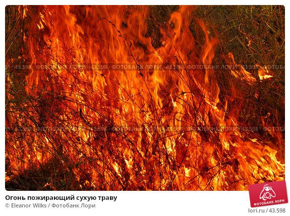 Огонь пожирающий сухую траву, фото № 43598, снято 3 июня 2007 г. (c) Eleanor Wilks / Фотобанк Лори