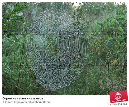 Огромная паутина в лесу, фото № 234494, снято 9 августа 2007 г. (c) Ольга Хорькова / Фотобанк Лори