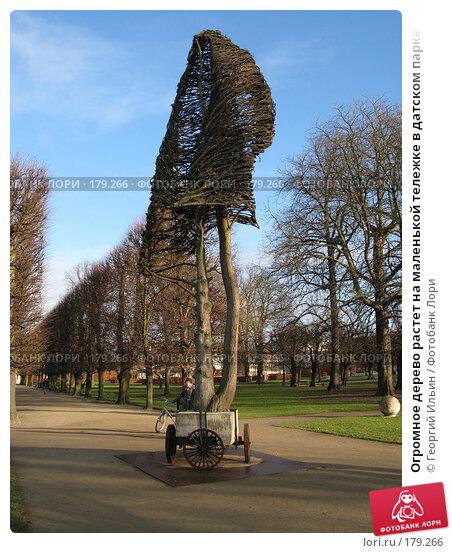 Огромное дерево растет на маленькой тележке в датском парке, фото № 179266, снято 31 декабря 2007 г. (c) Георгий Ильин / Фотобанк Лори